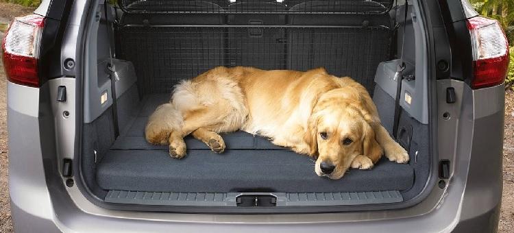 Perro viajando en maletero